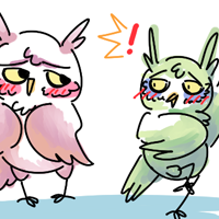 owl crush